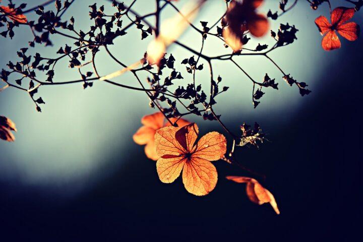 Metaflora - duh i duša utkani u nežne cvetove.